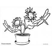 "Раскраски ""Летние цветы"""